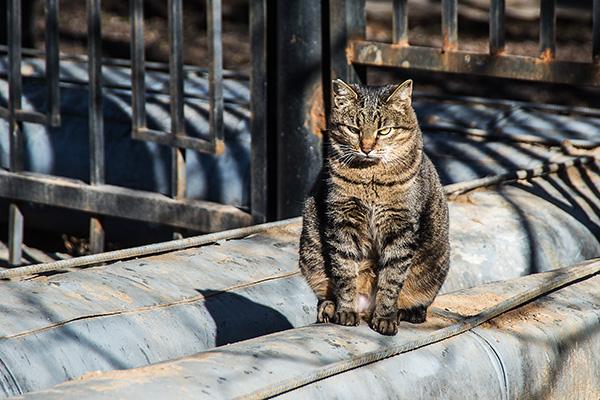 Ну чего смотришь? Кота не видел?!